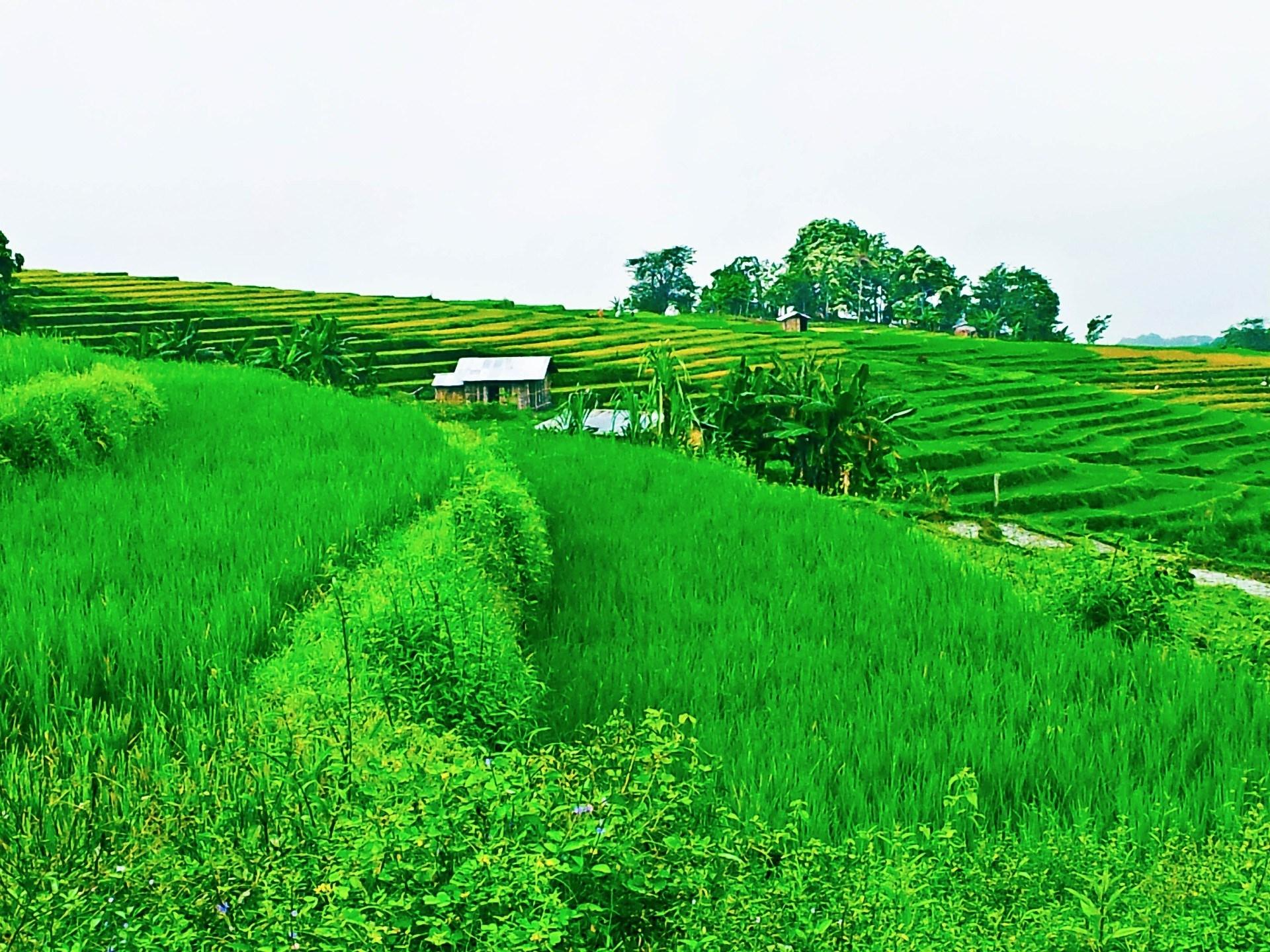 Ruteng my Ruteng, Photo by Shivaji Das