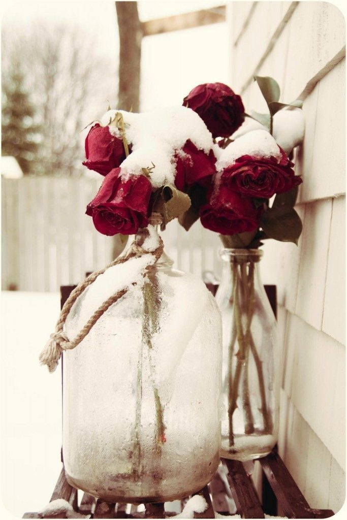 Winter Roses Monica Lacey 2012-2014