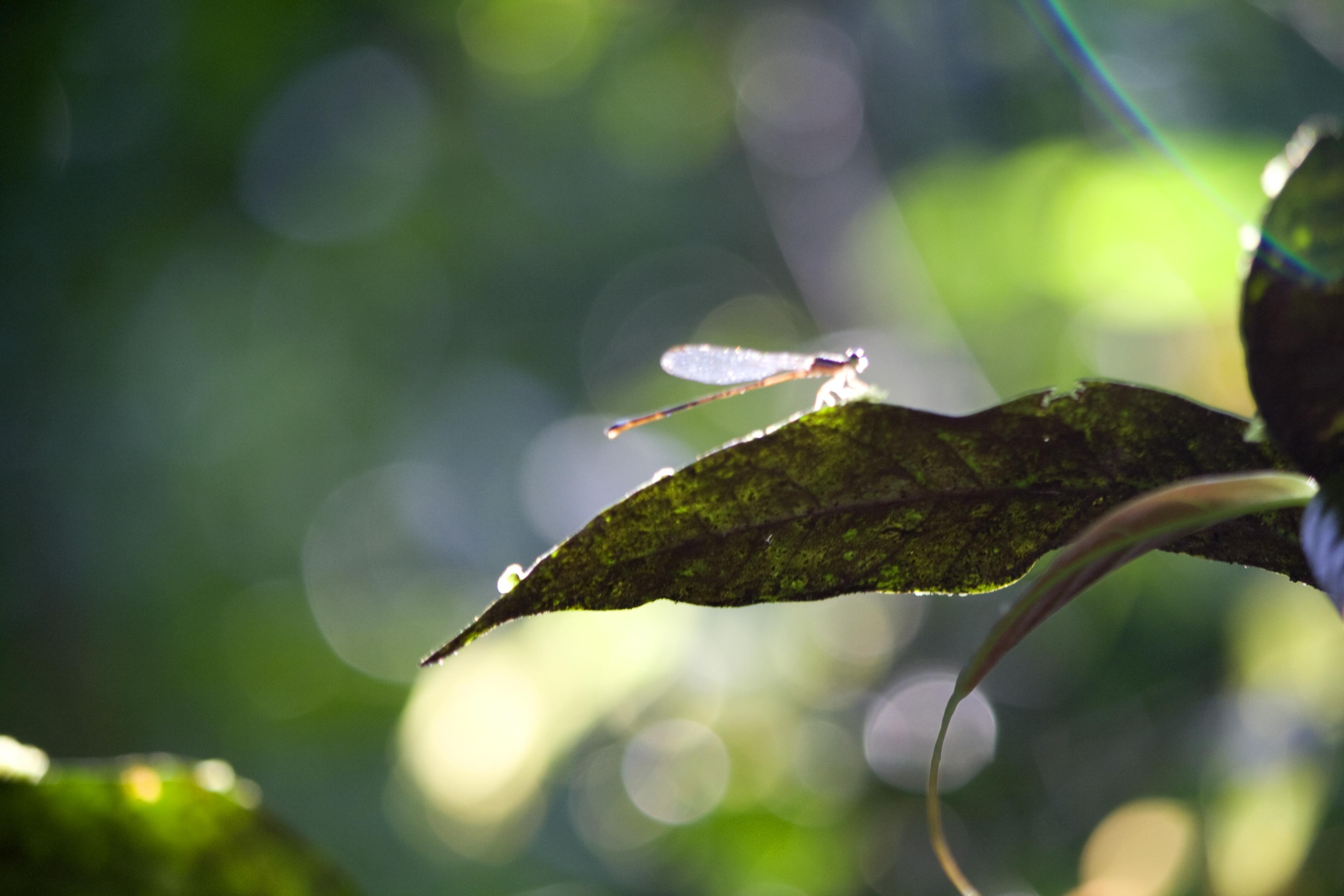 Leaf with dragonfly