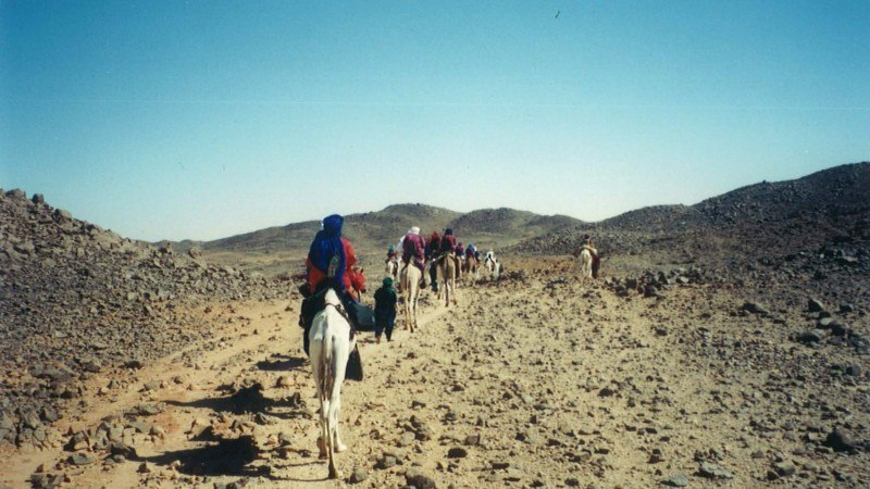 Camel Caravan Michael Singer