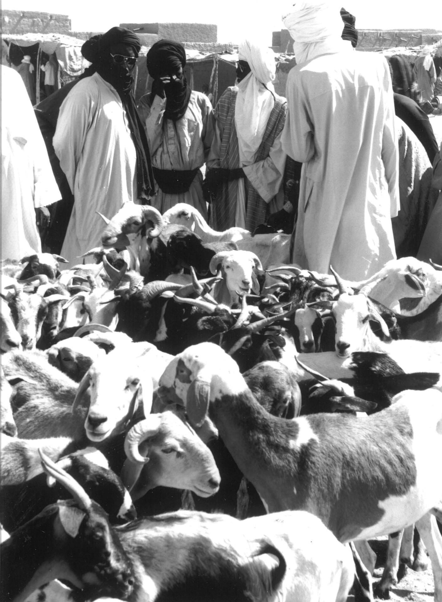 Tuareg and goats BW