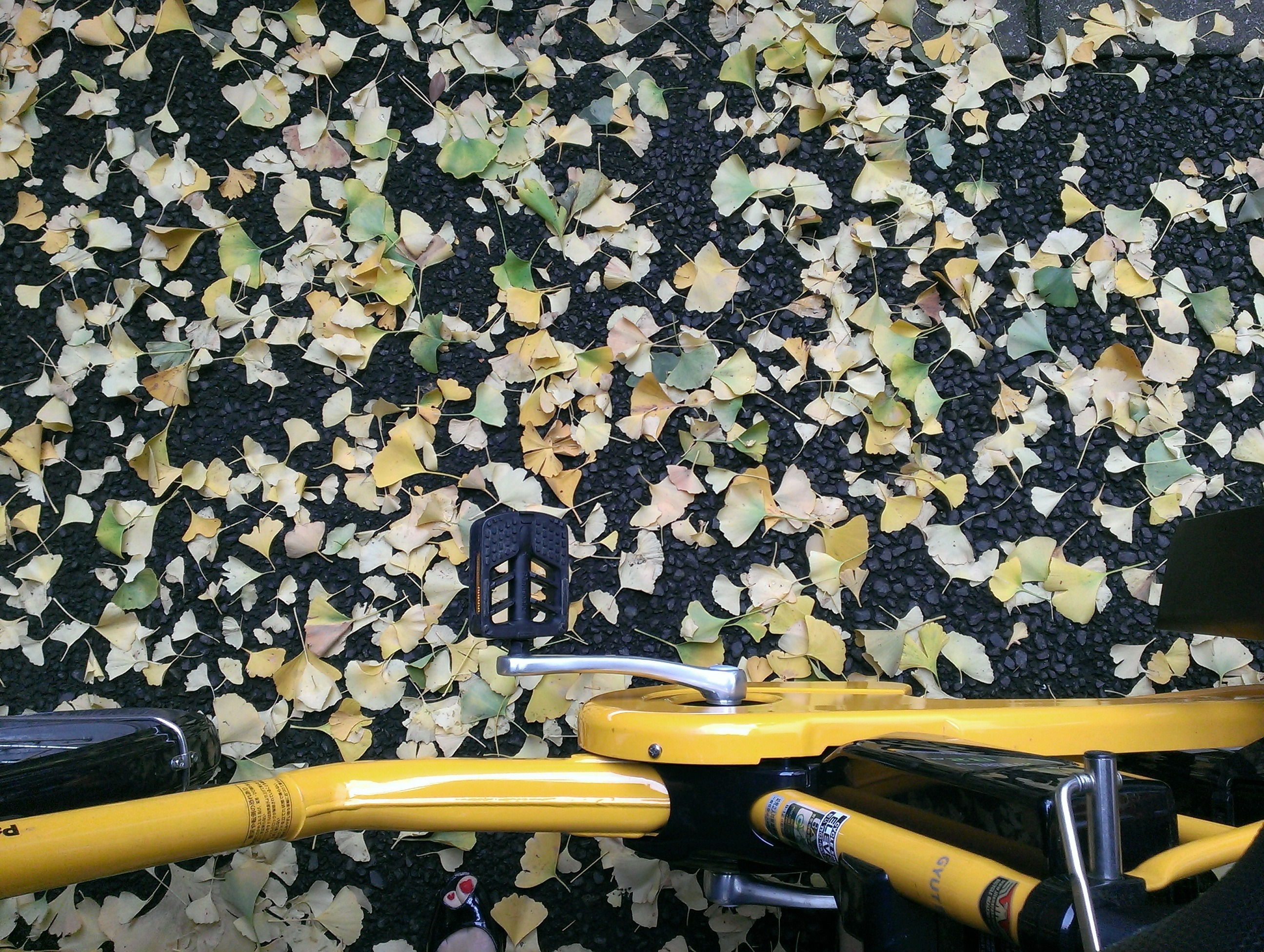 Bike and Ginko