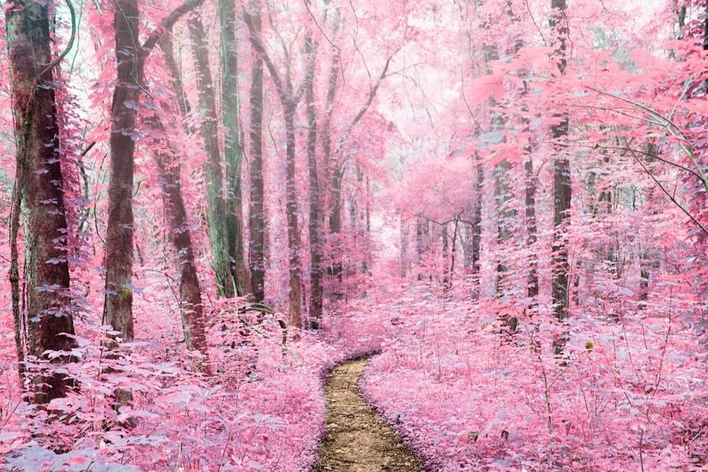 Pink_Fog_Samantha_Fortenberry