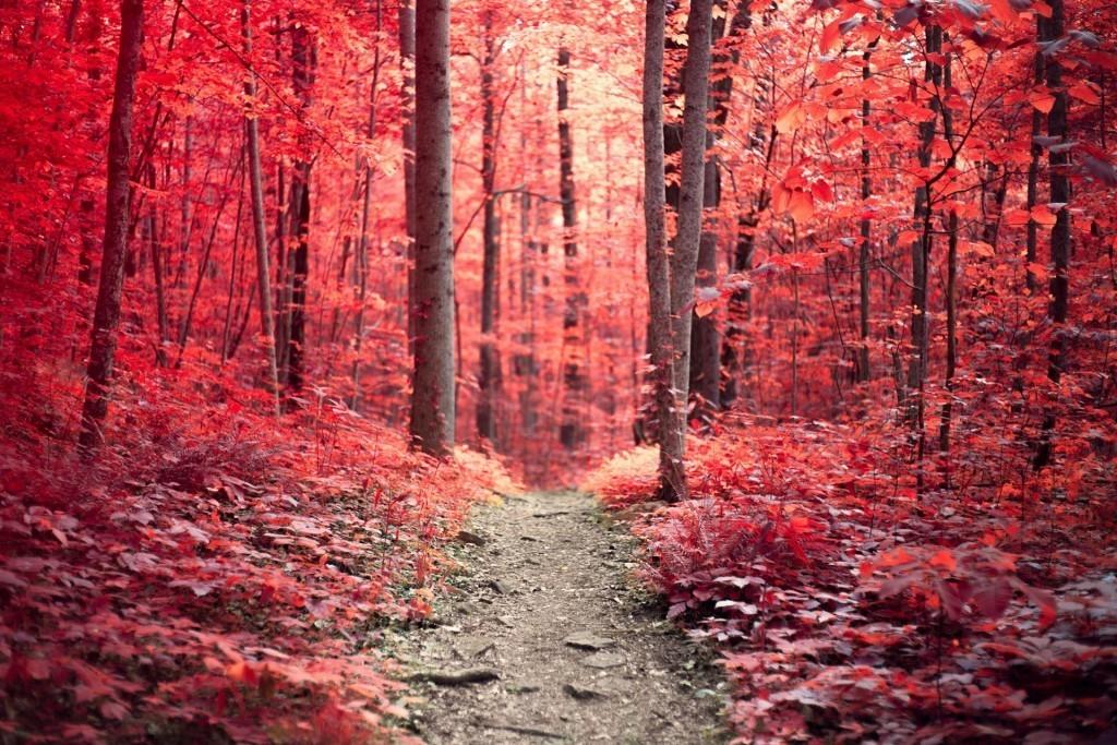 Scarlet_Woods_Samantha_Fortenberry