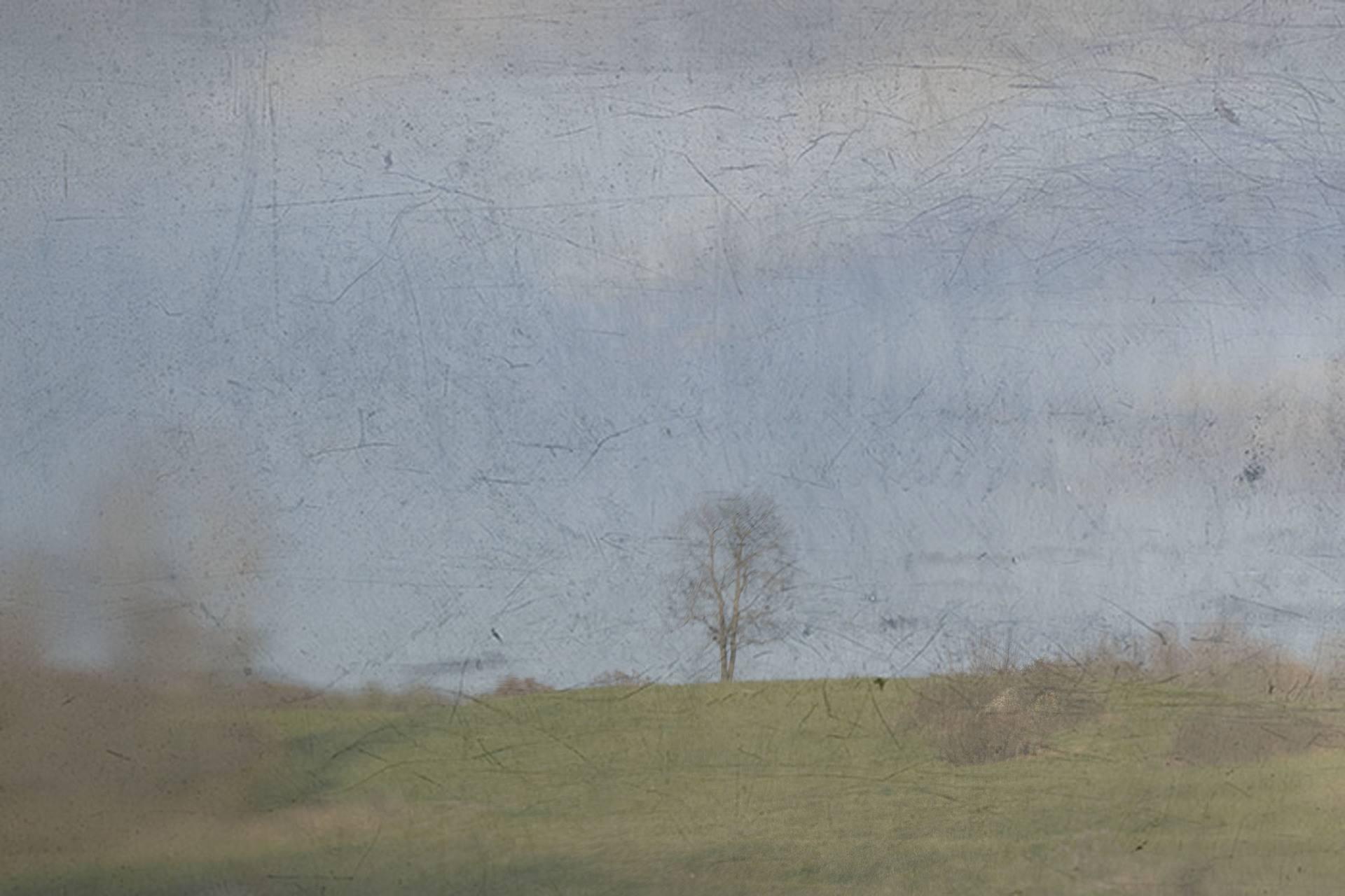 Day 137: Lone Tree Overlays