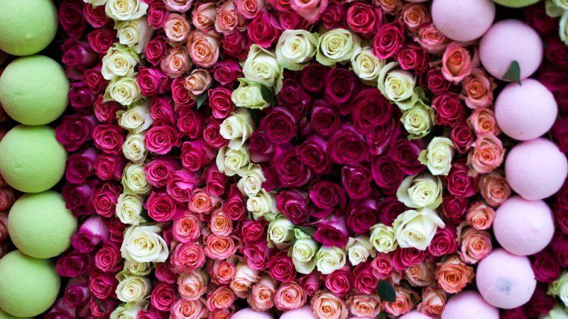 Fête de la Rose